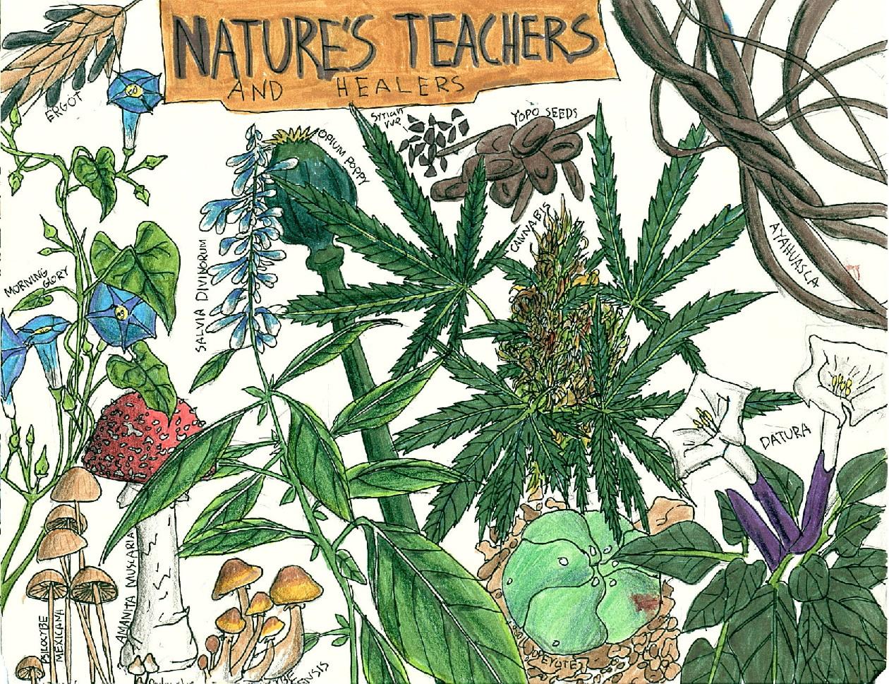 psychedelic-medicine-natures-teachers-healers