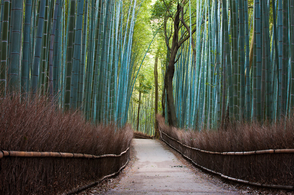 Sagano bamboo forest, Kyoto, Japan. Photo by: Ingeun Nam