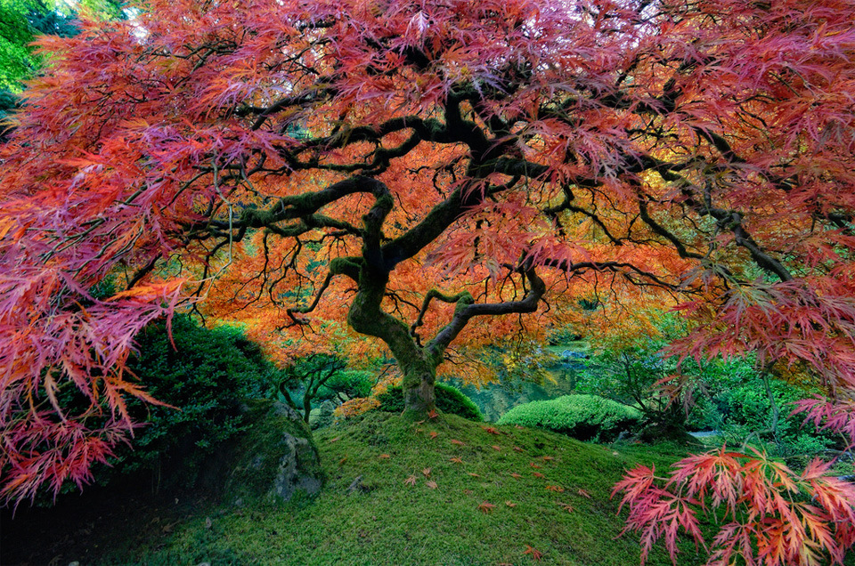 The Portland Japanese Garden is a traditional Japanese garden occupying 5.5 acres (22,000 m²), located within Washington Park in the west hills of Portland, Oregon, USA. Photo by: unknown