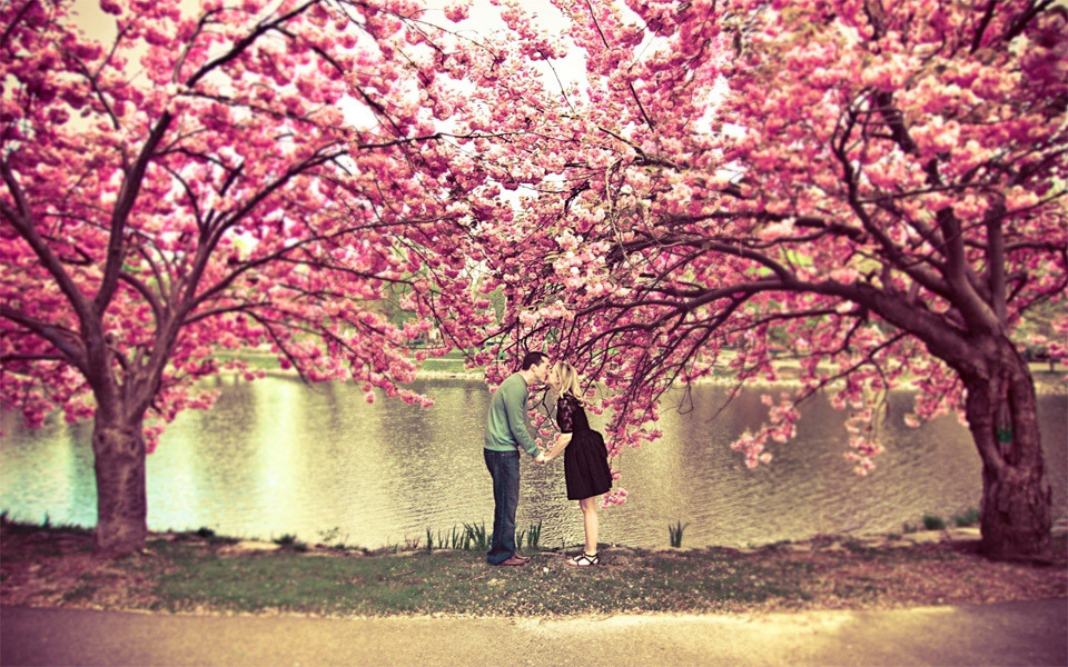 Kiss under a cherry blossom tree. Photo by: Korri Crowley