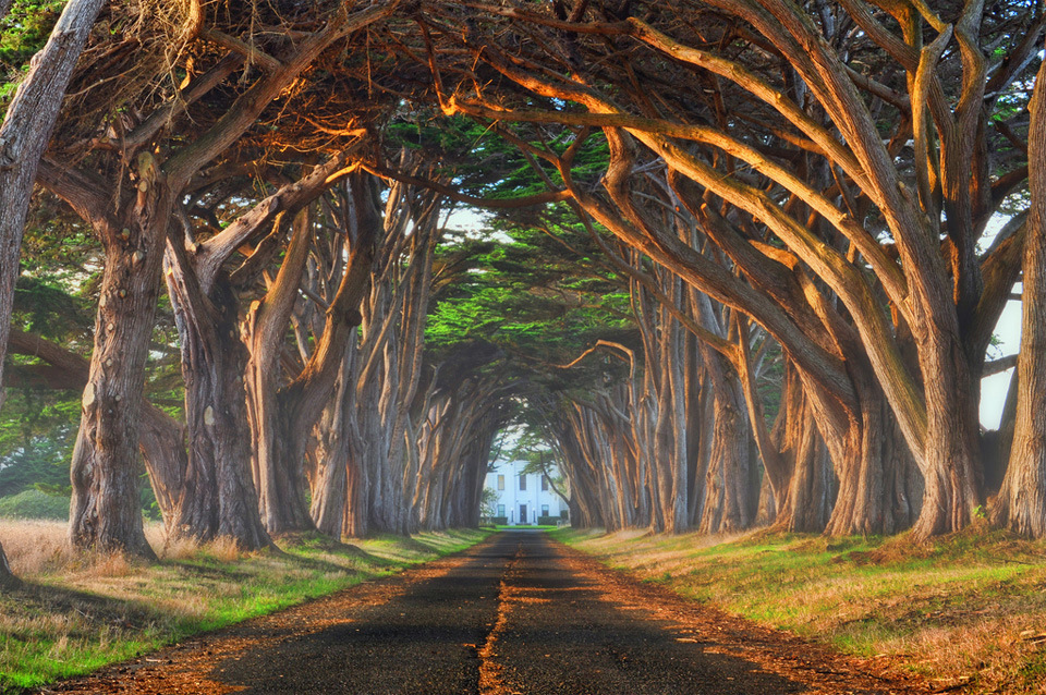 Natural tree tunnel, Portugal. Photo by: unknown