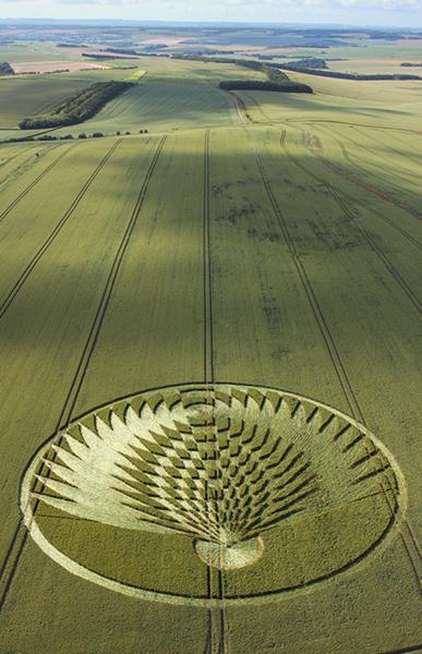 18-Uffington-Castle-Oxfordshire-08-07-06-Wheat--L2