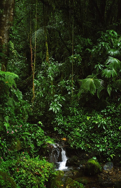 Inexpensive-Countries-to-Live-panama-rain-forest