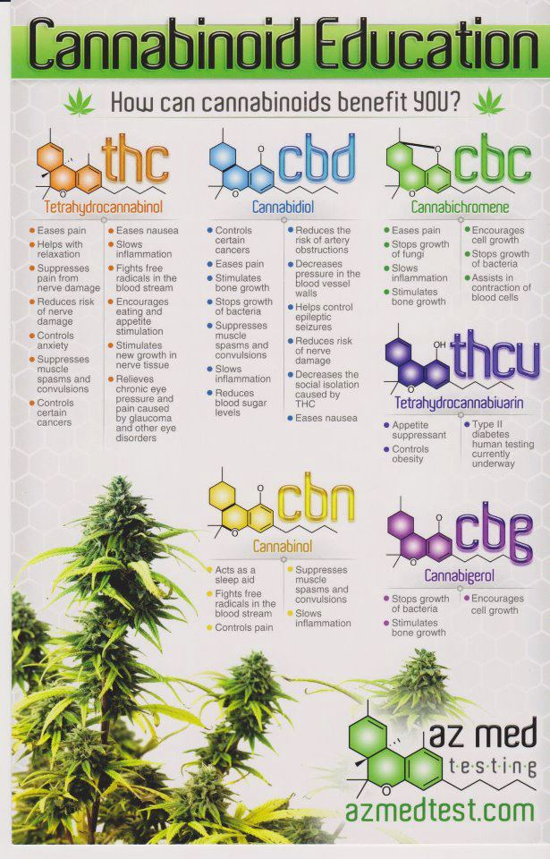 cannabinoid-benefit-education-infographic