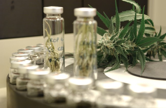 Inside a Stoner Lab, How Cannabis is Tested for Potency (Video) | Third Monk image 4