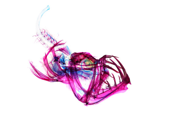 psychedelic-iori-tomita