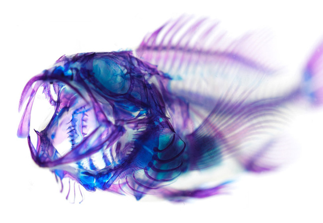 purple-iori-tomita