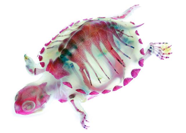turtle-iori-tomita