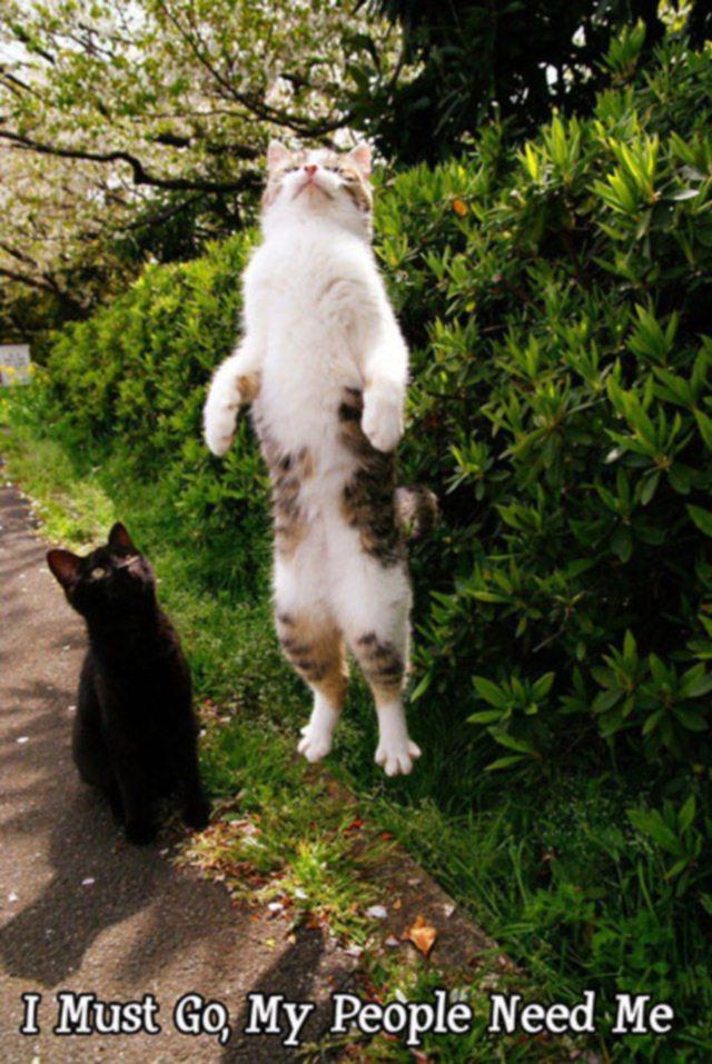 Beam Me Up Kitty