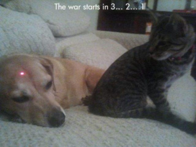 funny meme - Cat Crosshairs