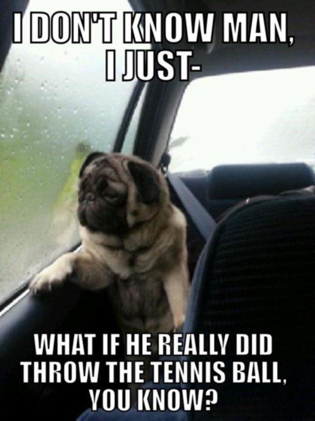 Pug Laments