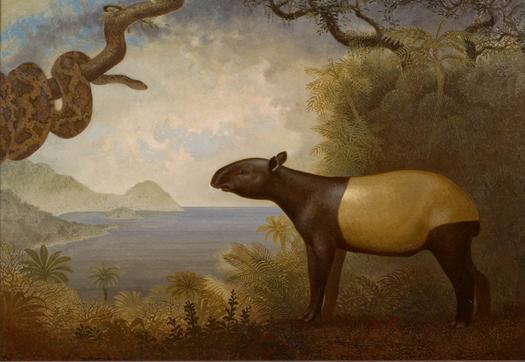 Tapir and Snake - Peter Zokosky