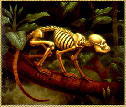 The monkey's bones