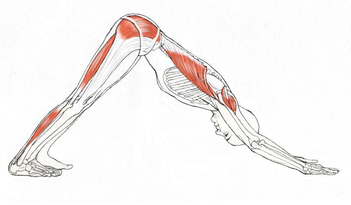 useful yoga pose - adho-mukha-svanasana