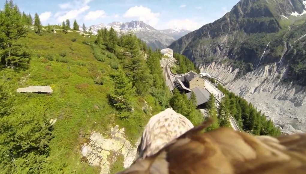 GoPro Animal Vision, Amazing Scenes Captured in HD (Video) | Third Monk