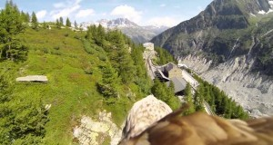 GoPro Animal Vision, Amazing Scenes Captured in HD (Video) | Third Monk