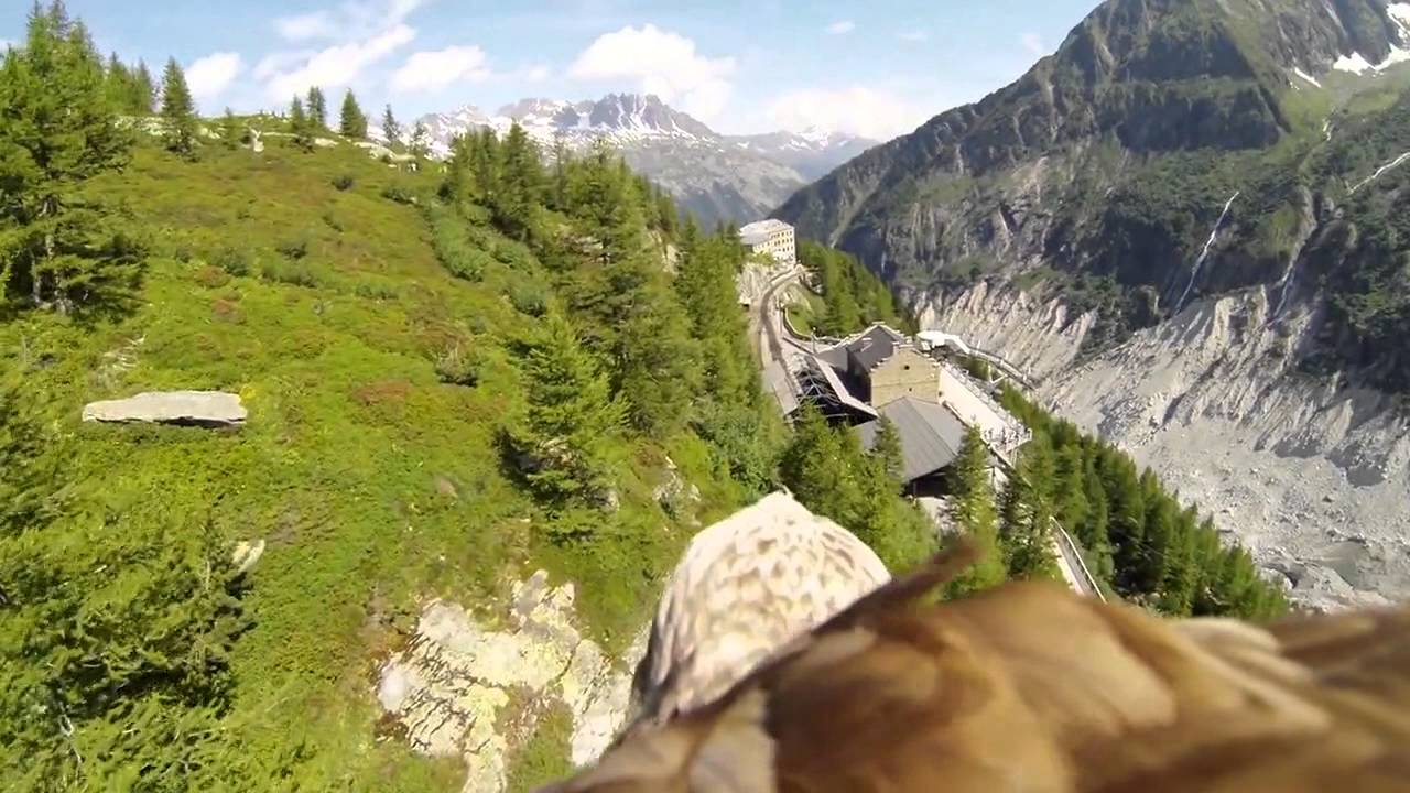 go-pro-eagle-point-of-view