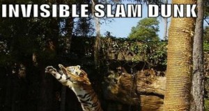 Funny Slam Dunk Gifs - Fails and Facials | Third Monk image 16