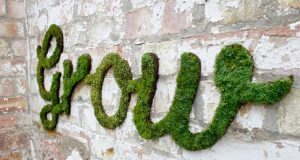 How to Create Environmentally Safe Moss Graffiti (Infographic, Video) | Third Monk image 2