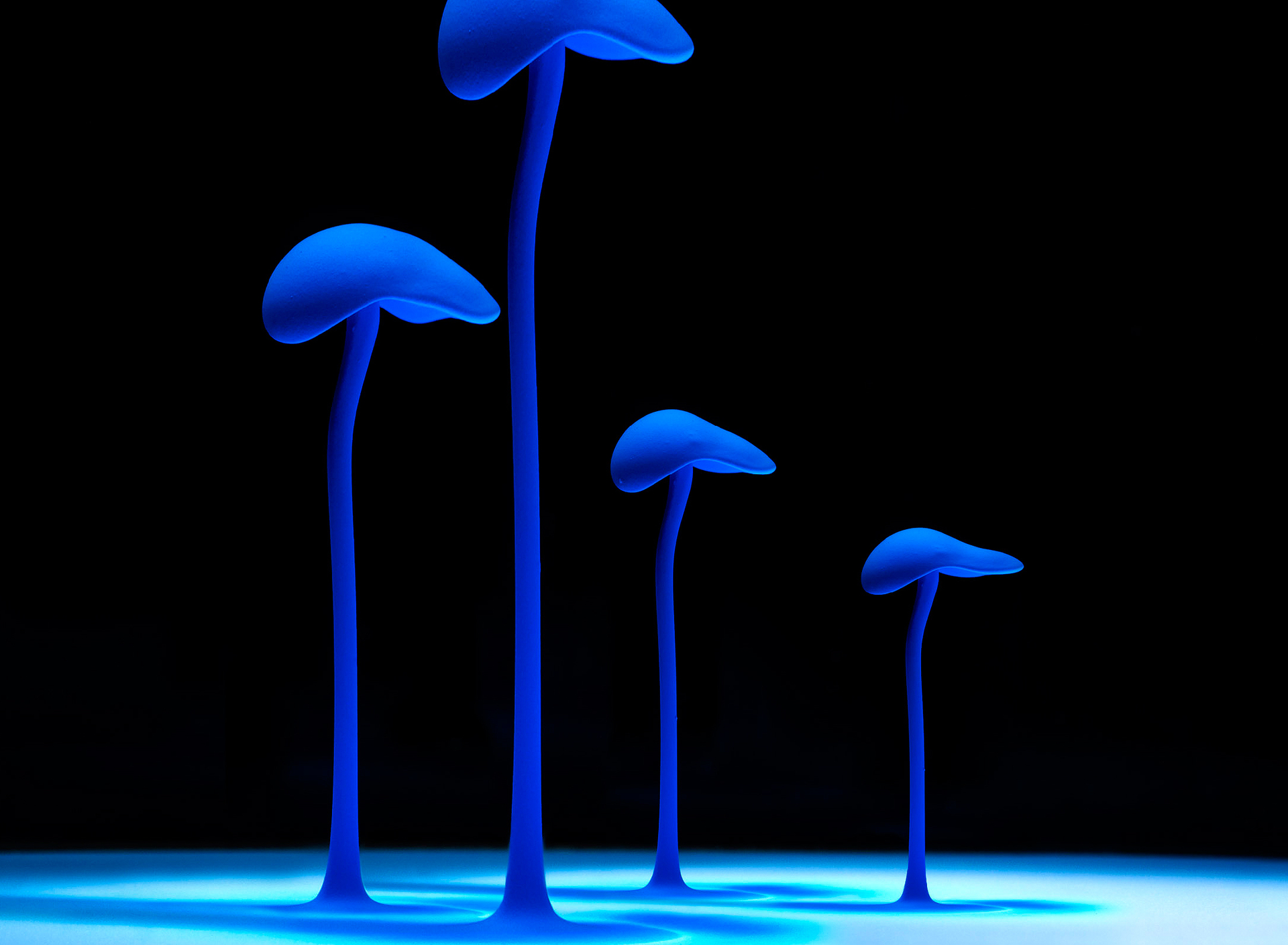 Mushrooms - Audio Visualizers