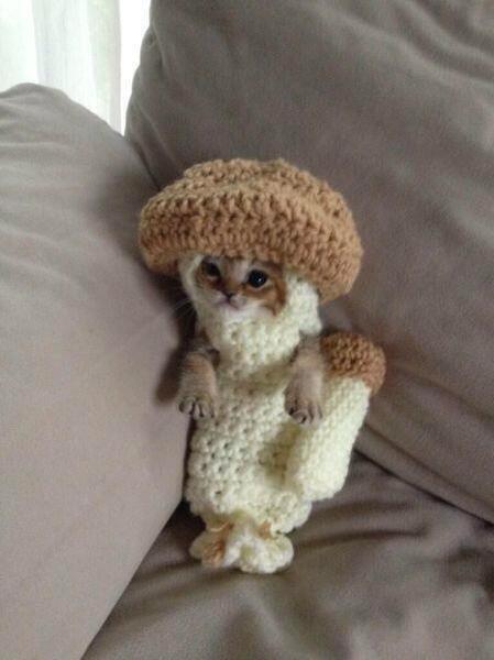 mushroom cat - Animals in Sweaters