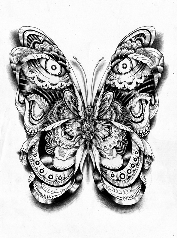 animal illustrations butterfly