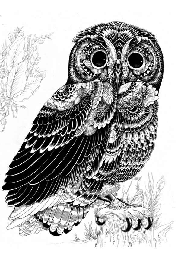 animal illustrations owl