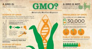 What is a GMO? (Infographic) | Third Monk