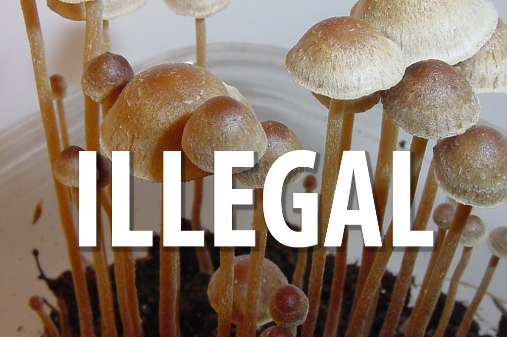 shrooms-illegal