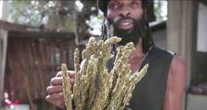 Jamaica Returning to Ganja Roots By Freeing Cannabis (Video) | Third Monk image 1
