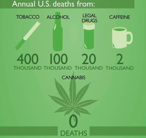 cannabis-vs-other-drugs-deaths