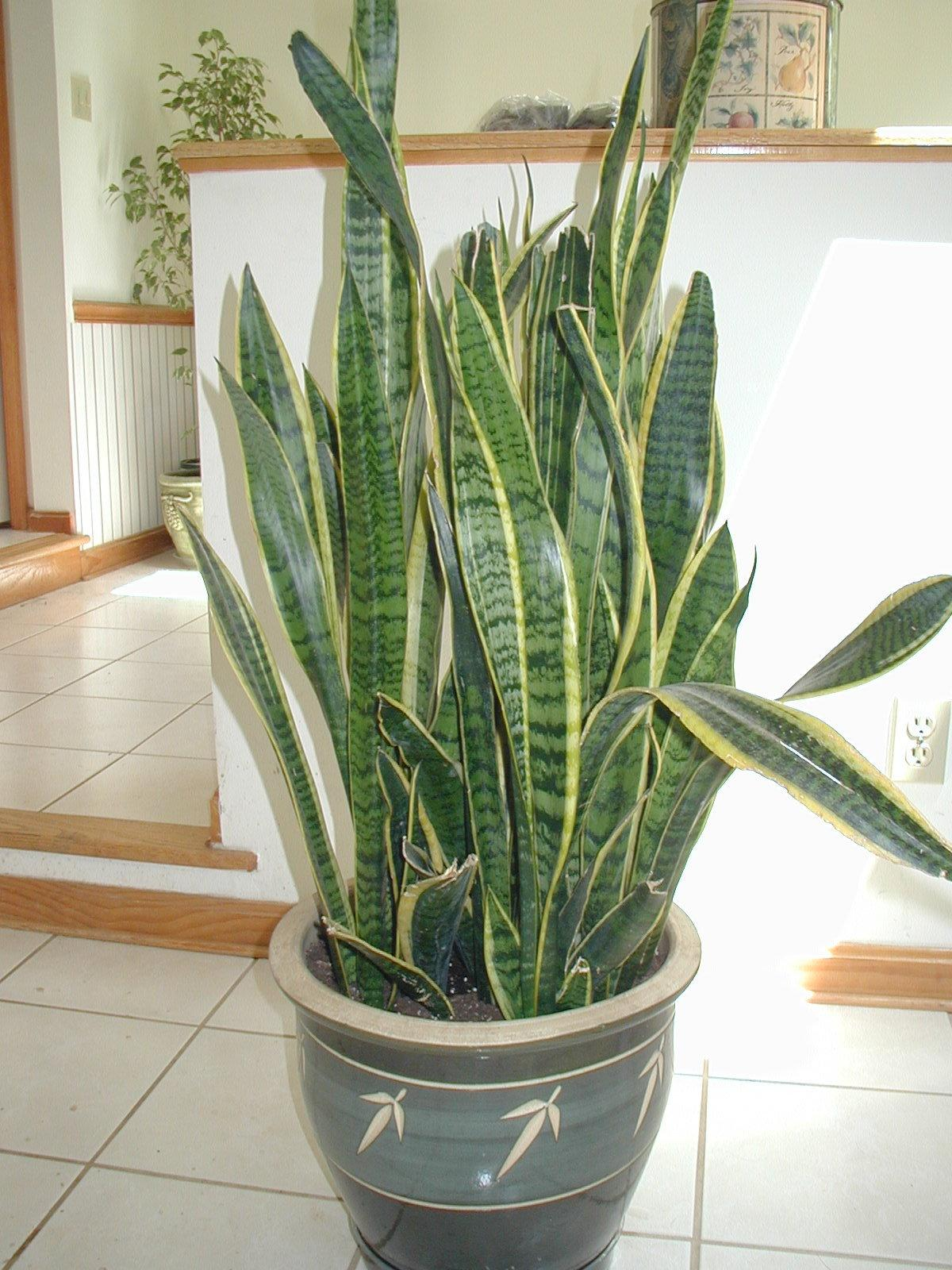 Plants That Detox