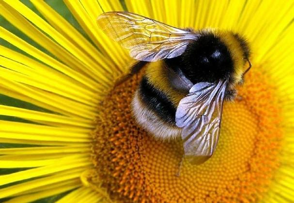 1238_100514hm-pollen1_t607