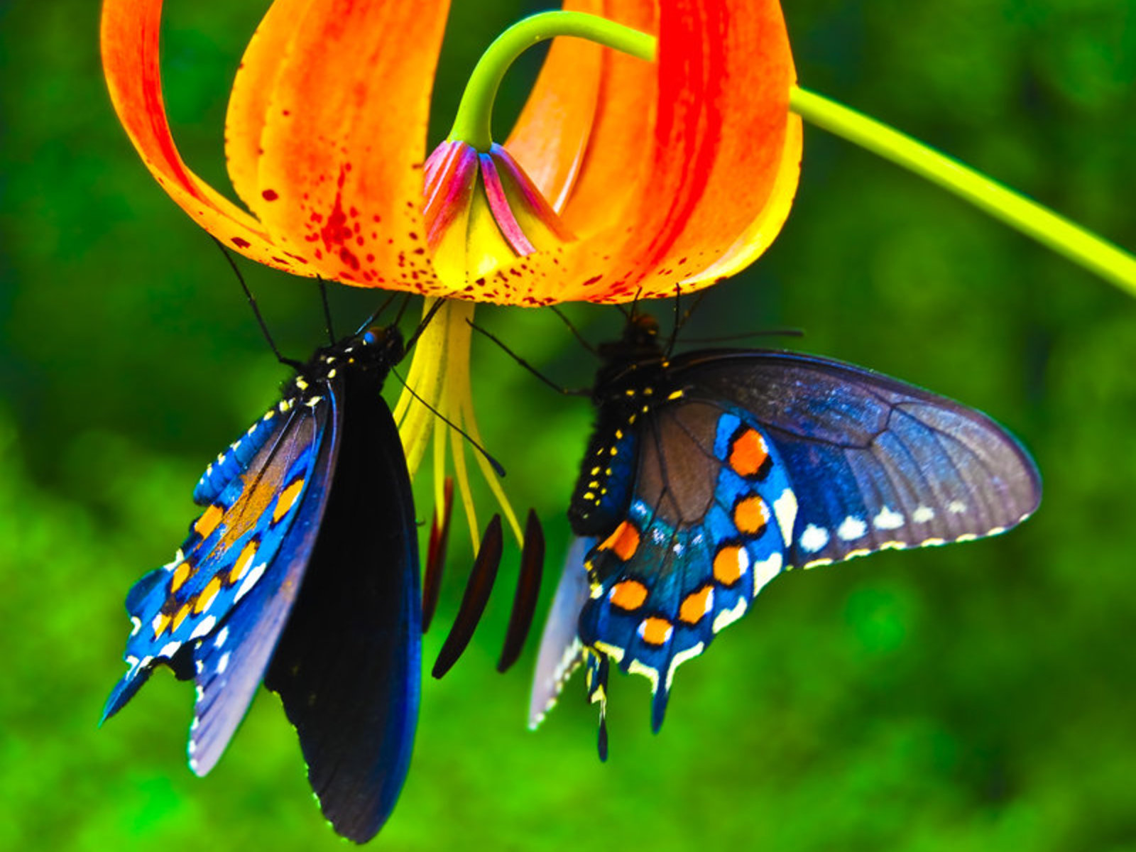Beautiful-Butterflies-Raise Your Vibration