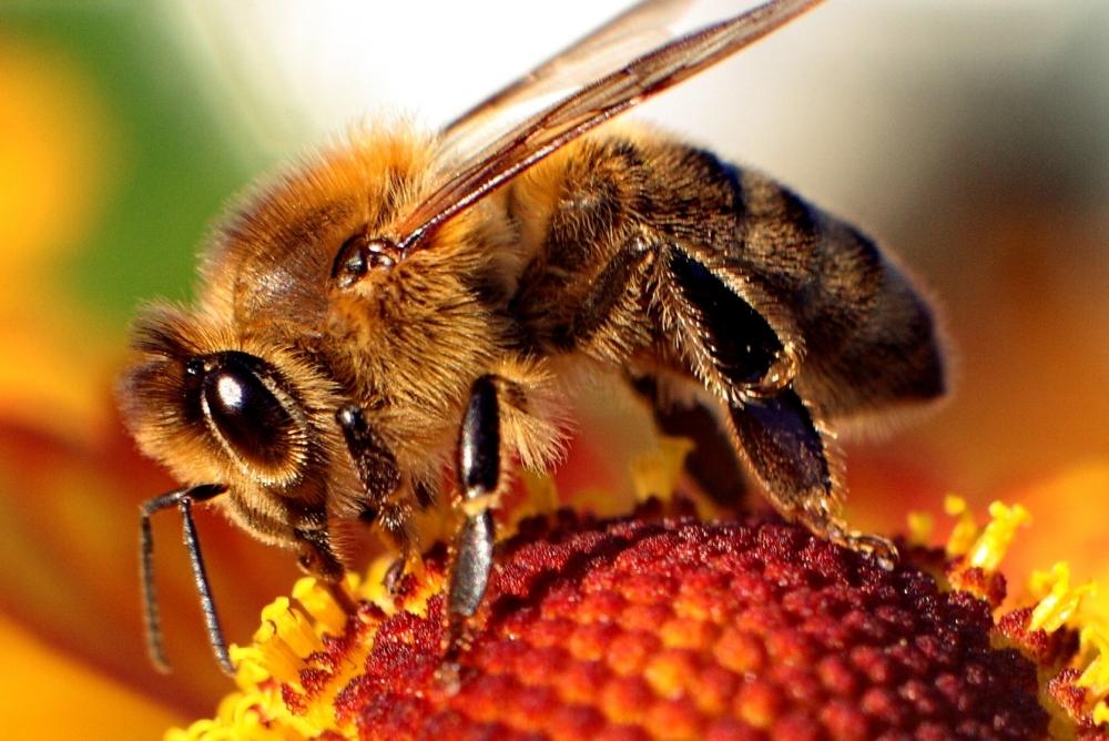 Bee-bath