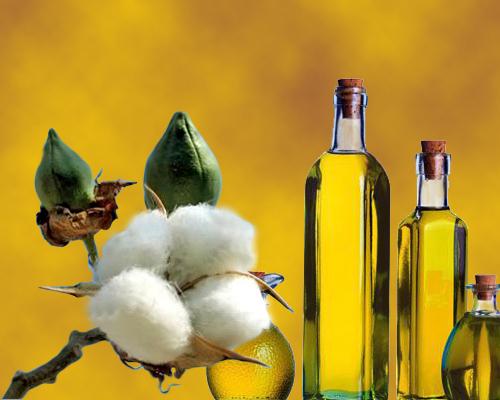 gmo cotton oil