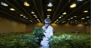 Growing 3,000 Pounds of Medical Cannabis, Step by Step Photo Gallery | Third Monk image 6