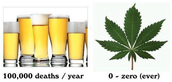 deaths-from-alcohol-vs-marijuana