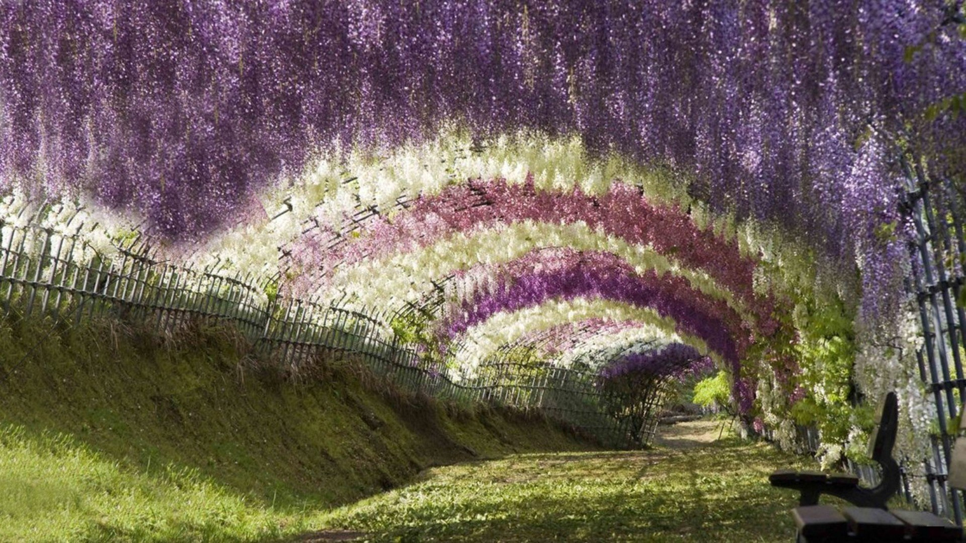 tree-tunnel Ashikaga Flower Park