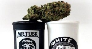 Stoner Marketing - Kevin Smith Uses Cannabis to Promote His New Film TUSK | Third Monk