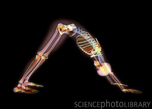 X-Ray Yoga 1