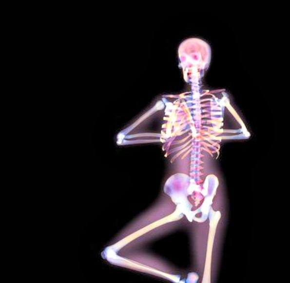 X-Ray Yoga - The Bones Behind The Poses (Video) | Third Monk image 5