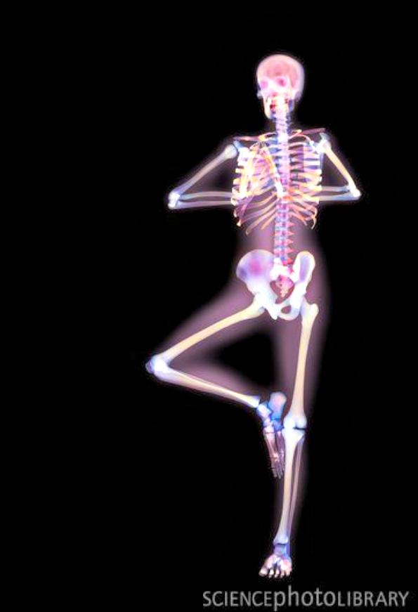 X-Ray Yoga 3