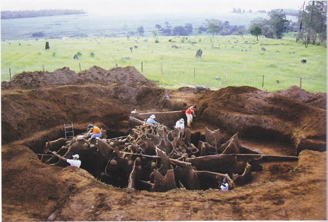 ant-mound-excavation