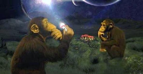 stoned-ape-mckenna