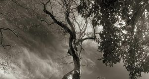The Ancient Trees by Beth Moon (Photo Gallery) | Third Monk image 5