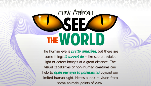 How Animals See The World Opening