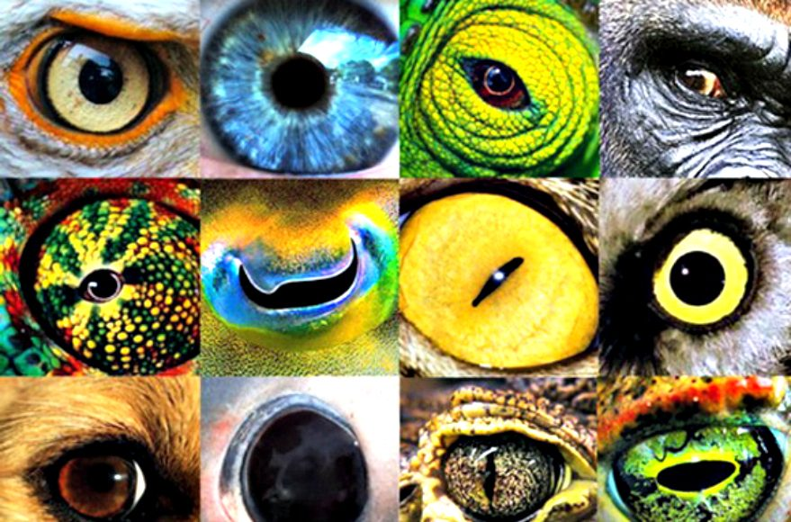 How Animals See The World (Video) | Third Monk image 1