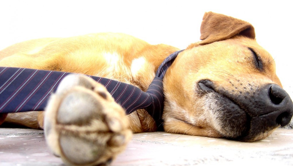 Polyphasic Sleep Cycles Increase Waking Hours   Third Monk image 3