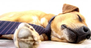 Polyphasic Sleep Cycles Increase Waking Hours | Third Monk image 3